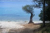 Private olive tree beach